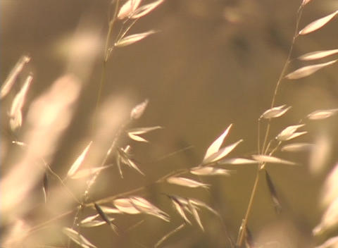 Strands of brush blow in the wind Stock Video Footage