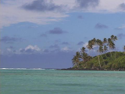 Palm trees grow on a tropical island paradise Stock Video Footage