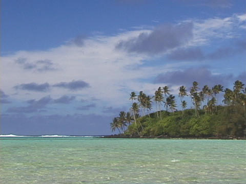 Palm tress grow on a tropical island Stock Video Footage