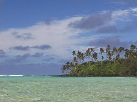 Palm tress grow on a tropical island Footage