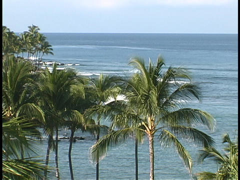Waves roll beneath Hawaiian palm trees Stock Video Footage