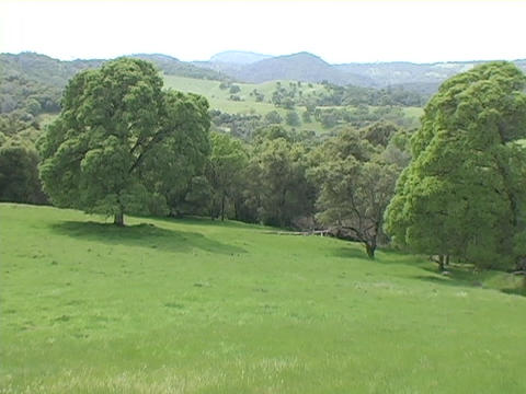 Trees stand on Green rolling hills and fields in Napa... Stock Video Footage