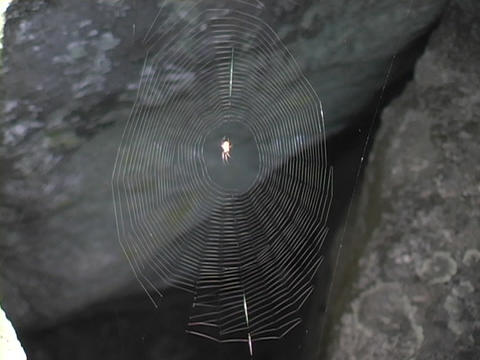 A thin spider web glistens between two rocks Stock Video Footage