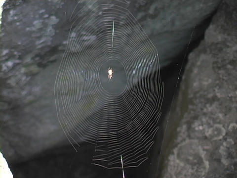 A Thin Spider Web Glistens Between Two Rocks stock footage