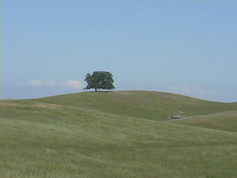 A single lonely oak tree stands on a distant hill in... Stock Video Footage