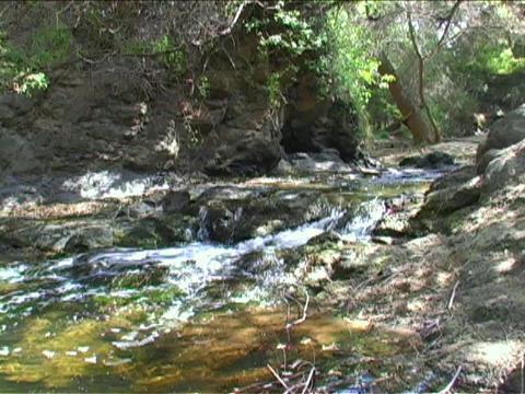 A stream flows through a forest Footage