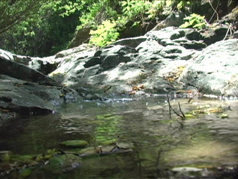 A stream runs through rocks in a forest Stock Video Footage