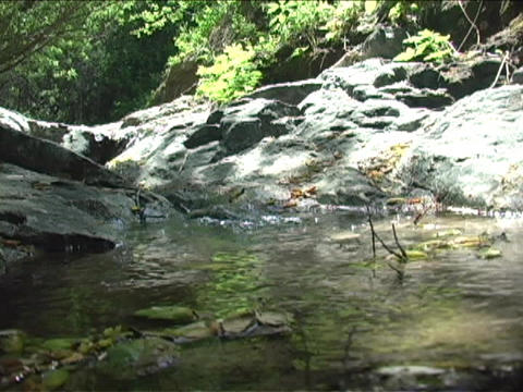 A stream runs through rocks in a forest Footage