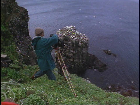 A cinematographer films birds Stock Video Footage