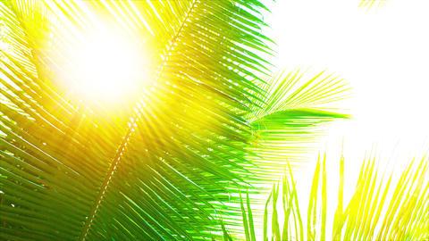 Golden Sun Shining through a Palm Leaf Footage