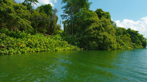 Heavy Vegetation Covers the Bank of a Broad River Footage