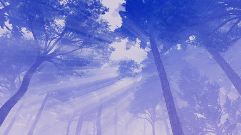 Pine trees with magic sunlight and fog Footage