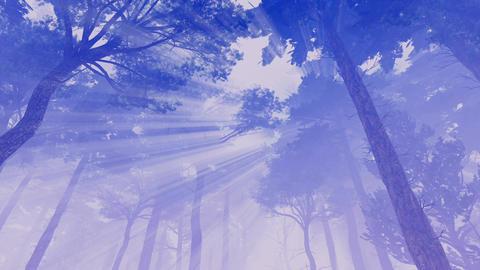 Sun rays shines through hazy pine crowns at dawn or dusk Footage