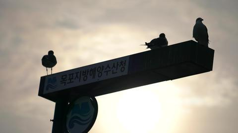 seagull backlight 목포지방해양수산청 Footage