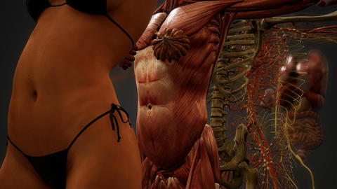 Animated 3D human anatomy illustration Live Action