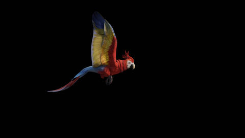 Parrot Flying GIF