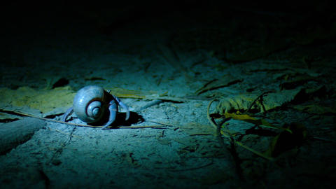 Hermit Crab Walking at Night under a Spotlight Footage