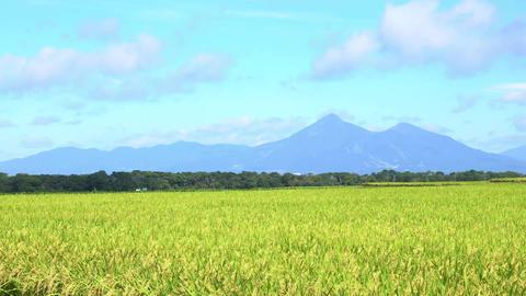 磐梯山と稲001 Footage