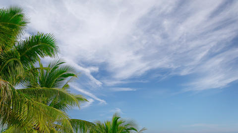Partly Cloudy Tropical Sky with Palm Trees Footage