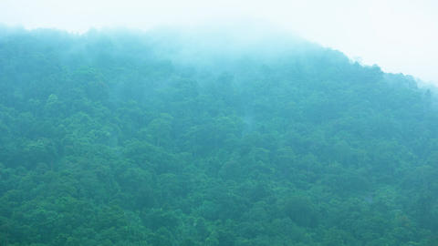 Fog and clouds on a hillside with a tropical forest. The rainy season in Asia Footage