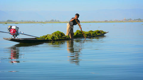 Burmese boatman poling his motorized canoe with a cargo of water grass Footage