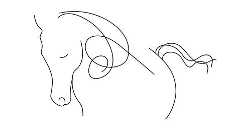Reveal contour drawing horse Animation on white background CG動画