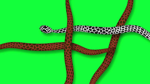 snakes crawling against a green screen-animation in 2d Animation