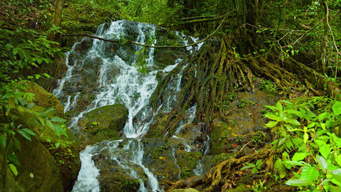Natural Waterfall Flows around Exposed Tree Roots. with Sound. 4k video Footage