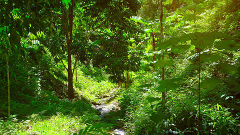 Cool Stream Following a Rocky Path through a Tropical Wilderness Footage
