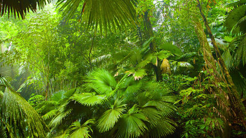 Tropical Stream through a Jungle Wilderness with Sound Footage