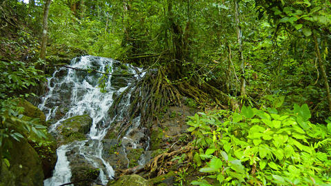 Waterfall Flows through Tree Roots in Rainforest Wilderness. with Sound Footage
