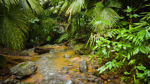 Tropical Mountain Stream Flowing through a Rainforest Wilderness. with Sound Live Action