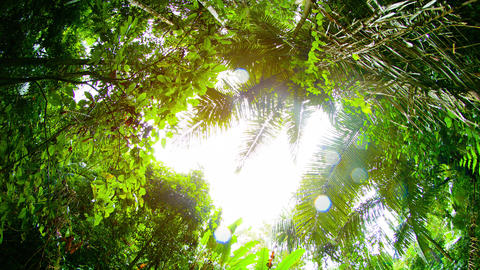 Sun and Rain through a Clearing in the Jungle Canopy. with Sound Footage
