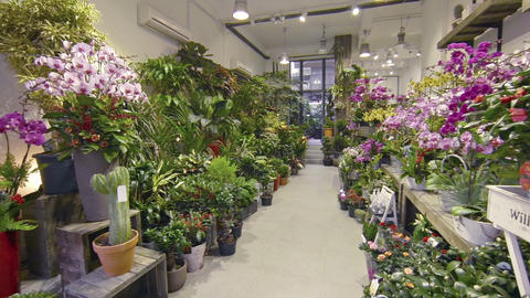 Garden shop. displaying orchids. cacti and many other varieties of plants Live Action