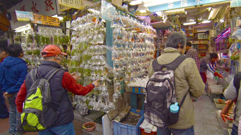 Shoppers browse through many varieties of tropical aquarium fish Footage