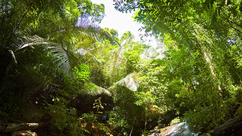 Abstract. Fisheye Clip of a Tropical Waterfall. with Sound Footage