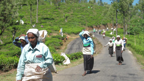 plantation workers in traditional clothes walk along road Live Action