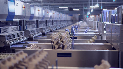 egg packaging moves on a conveyor factory interior Live Action
