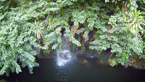 Natural. Tropical Waterfall. Overshadowed by Tree Branches. with Sound Footage
