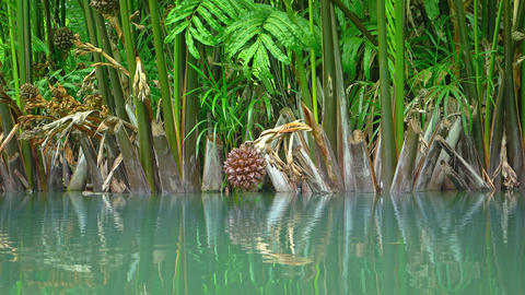 Exotic. Tropical Plants along a Flooded Pond Footage