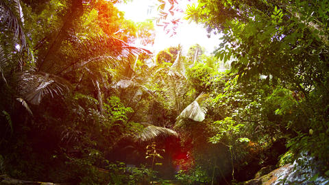 Tropical Waterfall Spills into a Natural Pool in the Rainforest. with Sound Footage