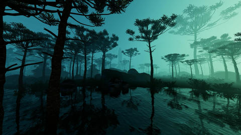 Rainforest In The Fog Animation