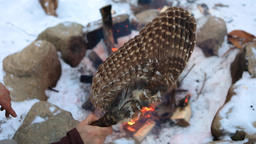Native man stokes camp fire in winter Live Action