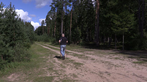 Hiker with walking sticks walking away on forest road Live Action