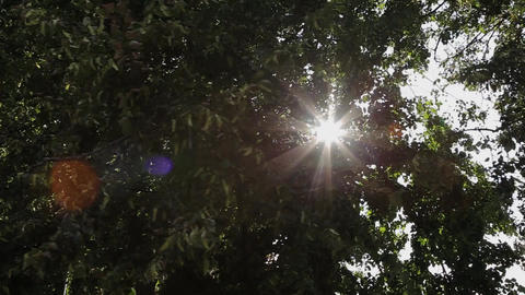 The rays of the sun shine through the branches of trees Live Action