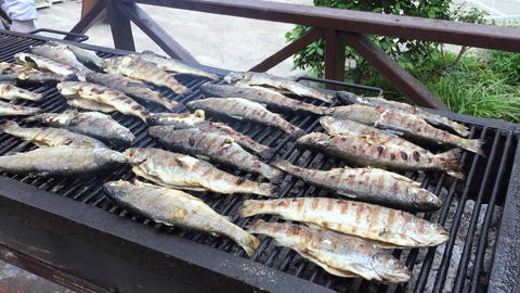 Grilled Fish Cooking Live Action
