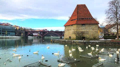 Scenic view of medieval Water tower, Old State bridge and Swans on the Drava Live Action