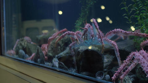 King crab moving in seafood tank on window display and traffic reflected Live Action