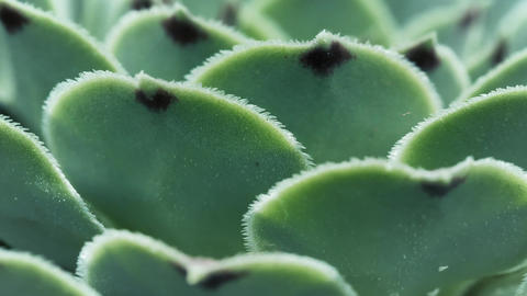 Green succulent macro close up Live Action