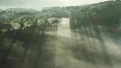 Drone view of the misty jungle and light rays piercing through trees and clouds at sunrise, Live Action